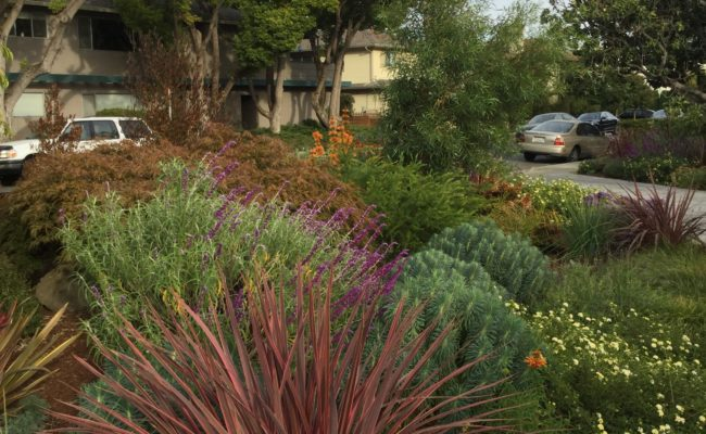Arbor Drive – Landscaping